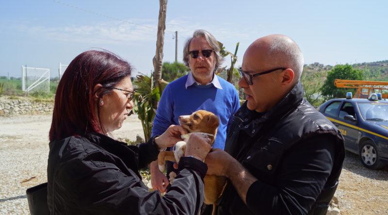 Storia a lieto fine per il cagnolino trovato in via paladini è stato adottato