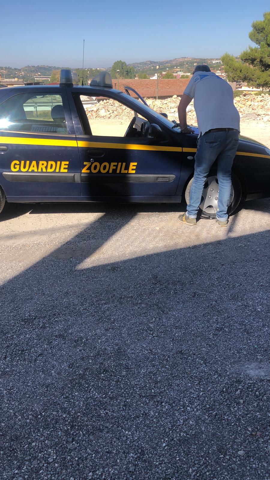 Ancora abbandoni di cuccioli a Caltanissetta intervengo le Guardie ecozoofile in via Gibil habib