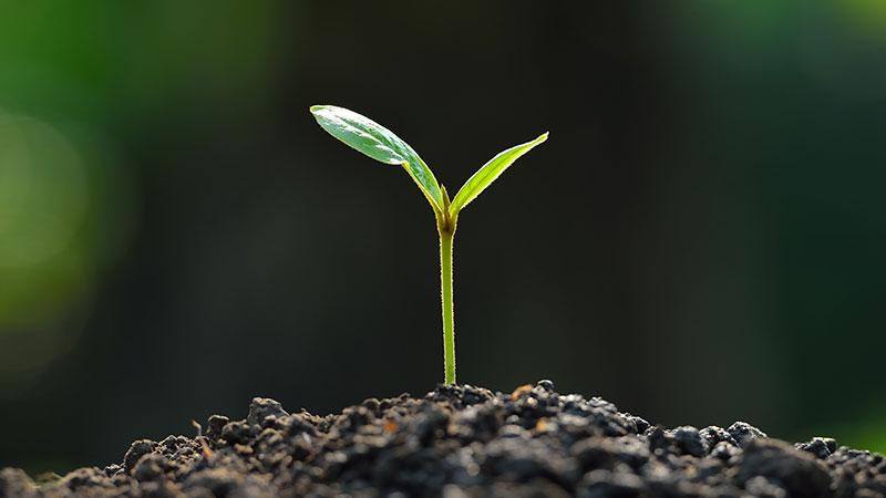 """Delia, al via """"Un albero per ogni nuovo nato e minore adottato"""""""